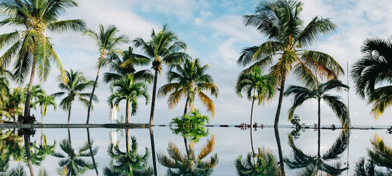 palmeras-plantas ornamentales